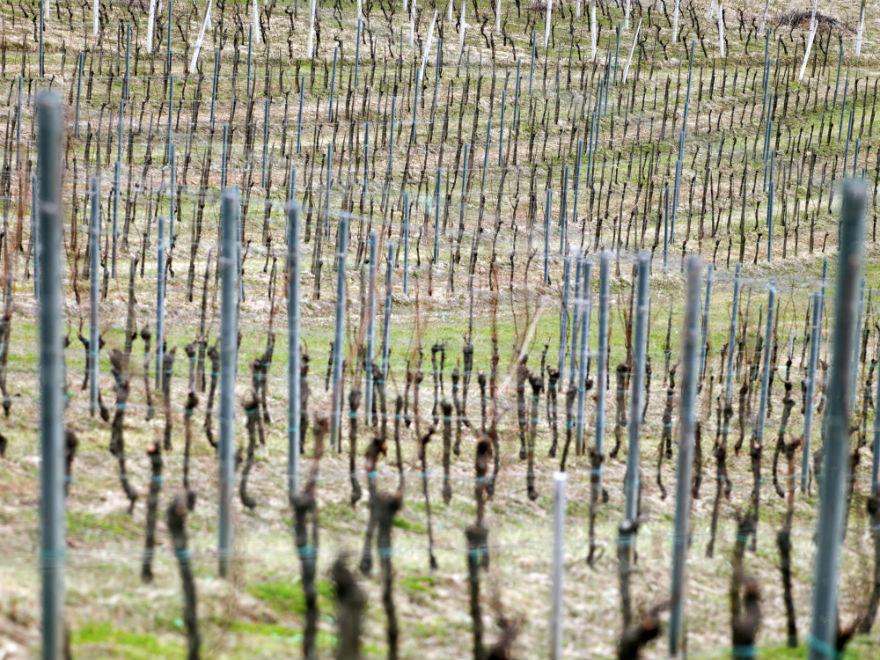 Vineyards Šember